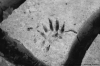Paw print in the dry mud after the flood, Fargo, North Dakota. 35mm 125PX.