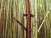 The bamboo guy.