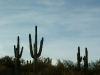 Some of the random cacti that are all over over the place.