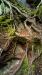 Tree roots. Cambridge, Vermont